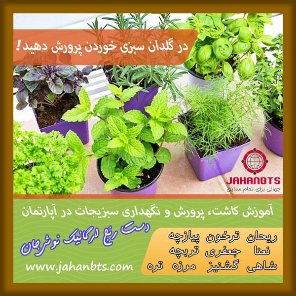 آموزش کاشت سبزی خوردن در گلدان + پروش و نگهداری 10 نوع سبزیجات پر مصرف