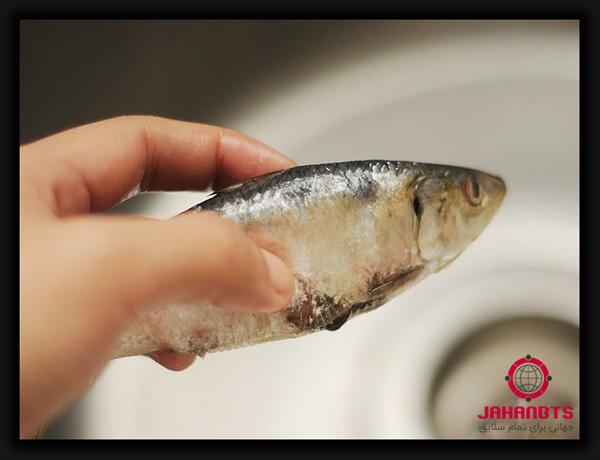 نحوه تشخیص ماهی تازه از کهنه